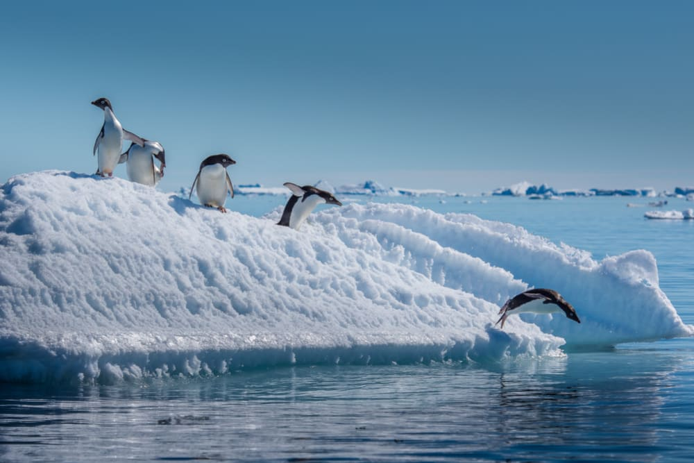 A Journey to the End of Planet Earth ~ Antarctica